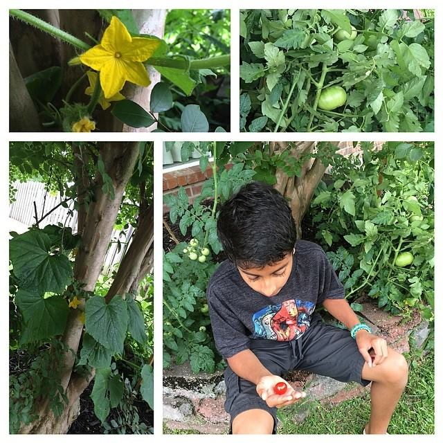Growing a summer vegetable garden with kids