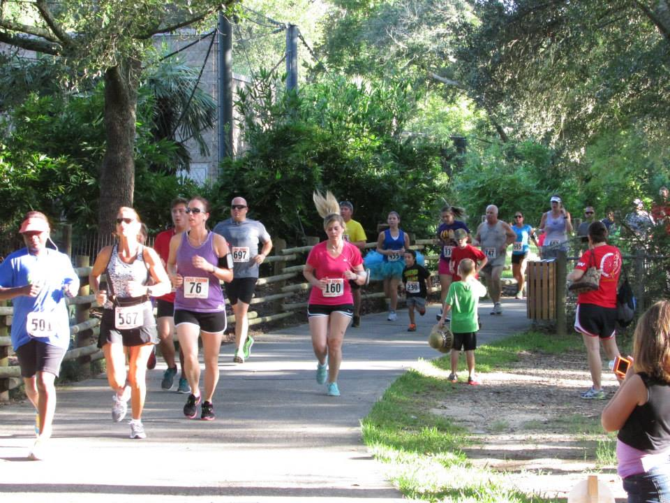 The race was started in 2006 by Club South Runners to raise money for the Zoo. It has grown from 100 runners to over 800 last year.  Come join the Fun!