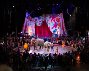 RINGLING BROS. AND BARNUM & BAILEY® PRESENTS BUILT TO AMAZE!® @ Baton Rouge River Center
