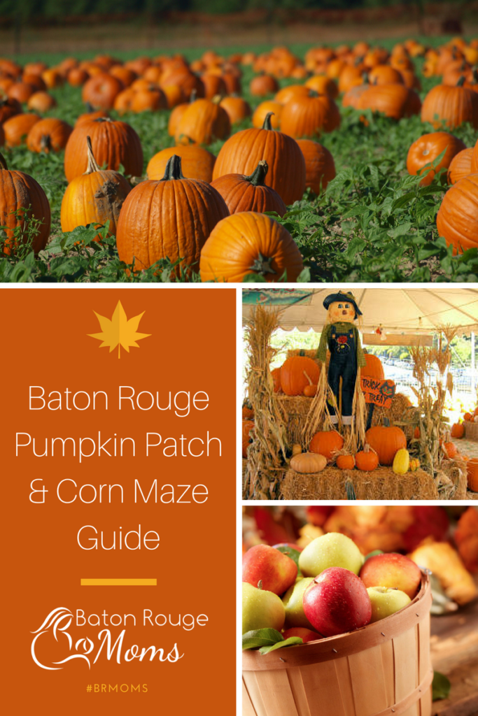 Baton Rouge Pumpkin Patch & Corn Maze