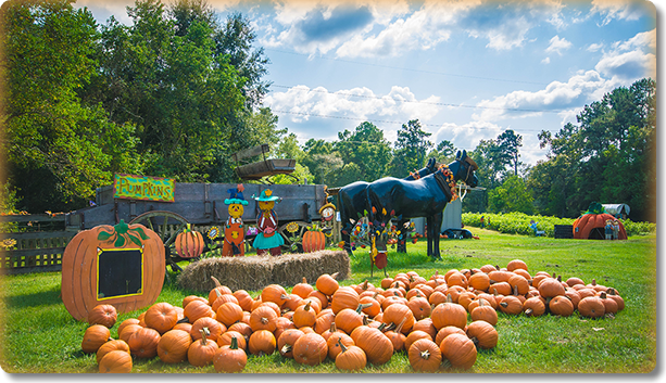 MRS. HEATHER'S PUMPKIN PATCH