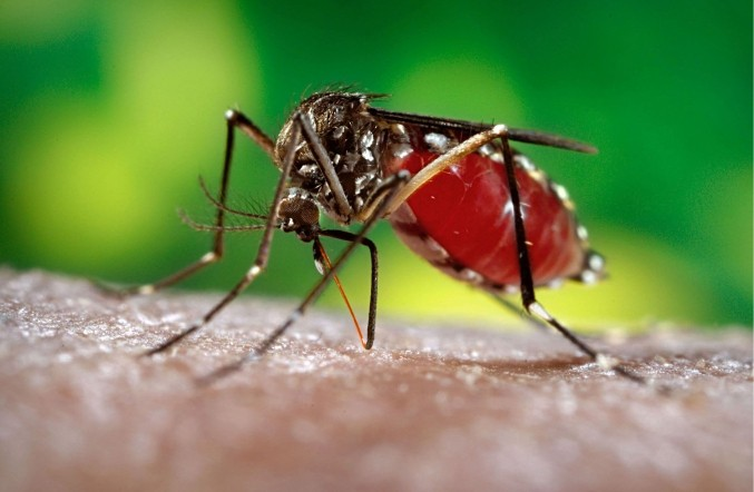 Zika Virus Baton Rouge Moms