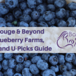 Blueberry picking near Baton Rouge & Beyond – Blueberry Farms, Orchards and U-Picks Guide