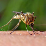 West Nile Virus in Baton Rouge: What Parents Need To Know