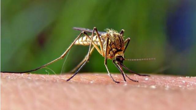 West Nile Virus Baton Rouge