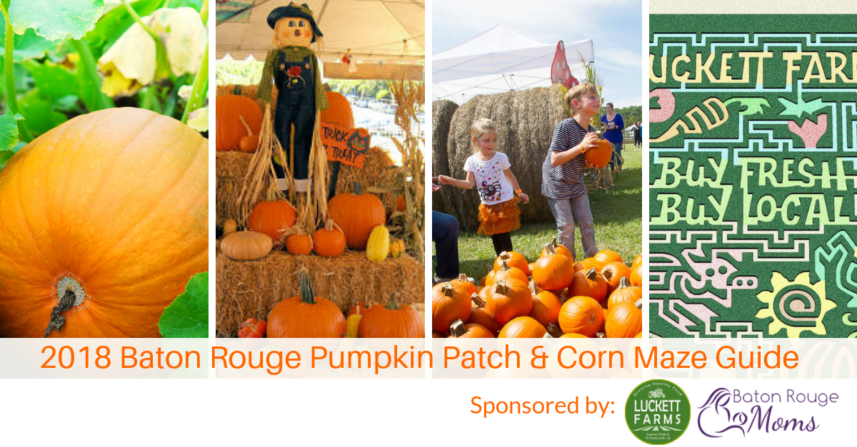 Baton Rouge Pumpkin Patch & Corn Maze Guide