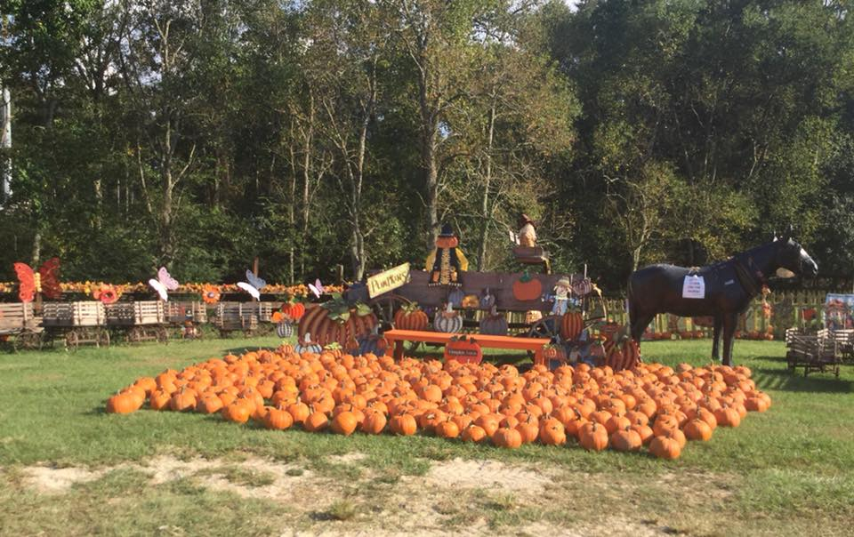 Mrs Heather's Pumpkin Patch