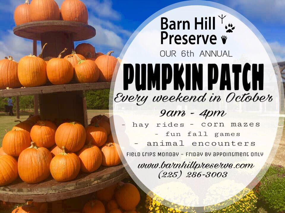 Barn Hill Preserve pumpkin patch