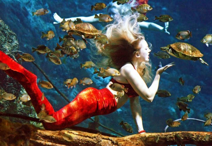 Weeki Wachee mermaids