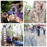 Rockin' at the Swamp – BREC's Bluebonnet Swamp Nature Center